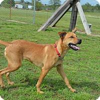 Adopt A Pet :: Howdy/Stix - Broken Arrow, OK