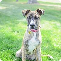 Adopt A Pet :: Bevie - Salt Lake City, UT