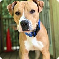 Adopt A Pet :: Teddy - Vernon Hills, IL
