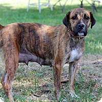 Boxer Mix Dog for adoption in Waldorf, Maryland - Joanna