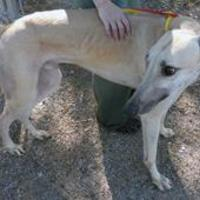 Adopt A Pet :: Keith 1509 - Tucson, AZ