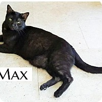 Adopt A Pet :: Max - Pittsburgh, PA