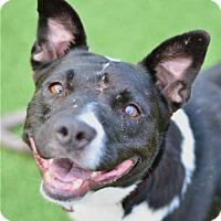 Adopt A Pet :: Negrita - San Francisco, CA
