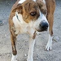 Adopt A Pet :: Princeton - Las Vegas, NV