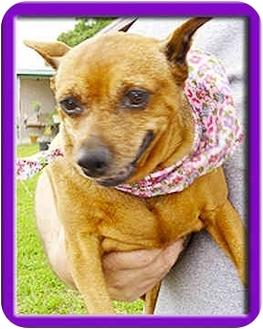 Miniature Pinscher Dog for adoption in North Palm Beach, Florida - Lee