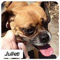 Adopt A Pet :: juliet - Goleta, CA