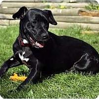 Adopt A Pet :: Koda - Palmyra, WI