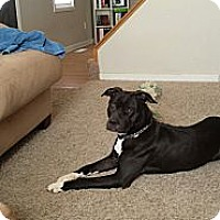 Adopt A Pet :: Lil Mama - Council Bluffs, IA