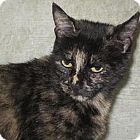 Adopt A Pet :: Precious - Southbury, CT