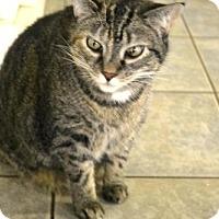 Adopt A Pet :: Puddin - East Smithfield, PA