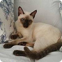 Adopt A Pet :: Susan - Whitestone, NY