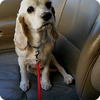 Adopt A Pet :: Miracle-Adopted! - Kannapolis, NC