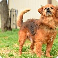 Adopt A Pet :: Cooper - Meridian, ID