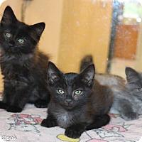 Adopt A Pet :: Lake, River, and Ocean - Ann Arbor, MI