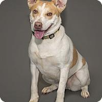 Adopt A Pet :: Kaycee - Waynesboro, PA