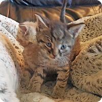 Adopt A Pet :: Manoj - Mississauga, Ontario, ON