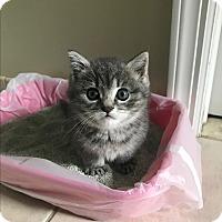 Adopt A Pet :: WILLOW aka Lulu - Hamilton, NJ
