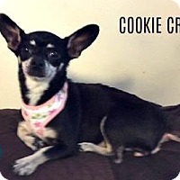 Adopt A Pet :: Cookie Crisp - Kimberton, PA