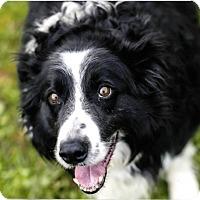 Adopt A Pet :: MR. B - Corning, CA