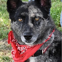 Adopt A Pet :: Suey-Great Family Dog! - Texico, IL