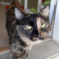 Adopt A Pet :: Michelle - Fairfield, IA