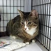 Adopt A Pet :: Jilly - Waynesville, NC