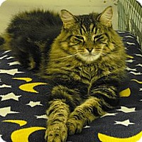Adopt A Pet :: Mr. Finster - Mission, BC