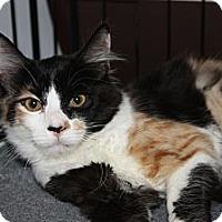 Adopt A Pet :: Princess (2) (LD) - Little Falls, NJ