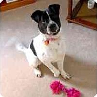 Adopt A Pet :: Layla - Alexandria, VA