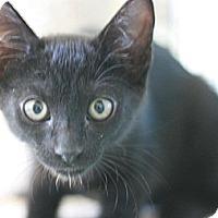 Adopt A Pet :: Radar - Canoga Park, CA
