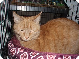 Domestic Shorthair Cat for adoption in Germansville, Pennsylvania - Melody