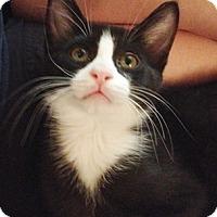 Adopt A Pet :: Aidan - North Highlands, CA