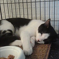 Adopt A Pet :: Polenc - Scottsdale, AZ