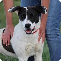 Adopt A Pet :: Lullabelle - Lander, WY