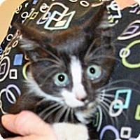 Adopt A Pet :: Larry - Wildomar, CA