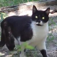 Adopt A Pet :: Domino - Ravenel, SC