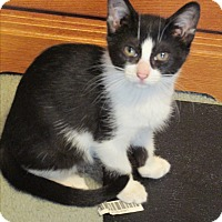 Adopt A Pet :: Neddles - Plattekill, NY