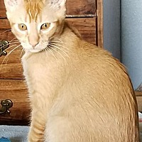 Adopt A Pet :: ROONEY - Modesto, CA