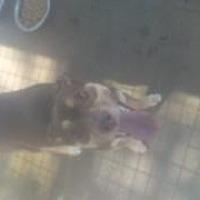 Adopt A Pet :: Maddie - Clarksville, AR