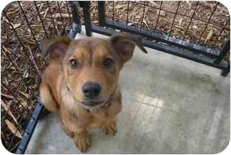 Shepherd (Unknown Type)/Terrier (Unknown Type, Medium) Mix Puppy for adoption in Fair Oaks Ranch, Texas - GasStationPups