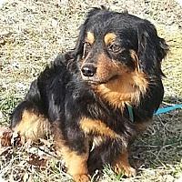 Adopt A Pet :: Kip - Brattleboro, VT