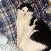 Adopt A Pet :: Binx - Spotsylvania, VA