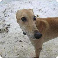 Adopt A Pet :: Lazoom (Go Bon Lazoom) - Chagrin Falls, OH