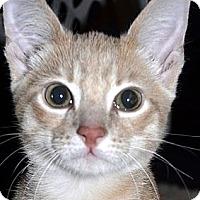 Adopt A Pet :: Thomas - Xenia, OH