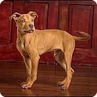 Adopt A Pet :: Marley - Owensboro, KY