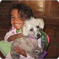 Adopt A Pet :: Nugget - Albuquerque, NM