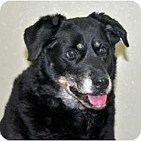 Adopt A Pet :: Greta - Port Washington, NY