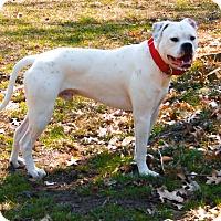 Adopt A Pet :: Zeke - Cedar Rapids, IA