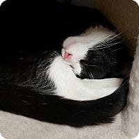 Adopt A Pet :: Vinny - Scottsburg, IN