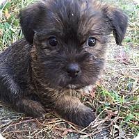 Adopt A Pet :: Finn-pending adoption - Omaha, NE